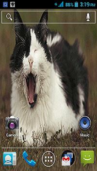 Livecat